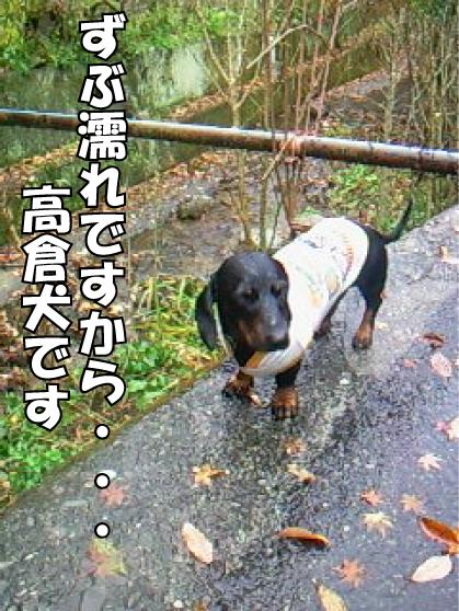 7_20101205211231.jpg