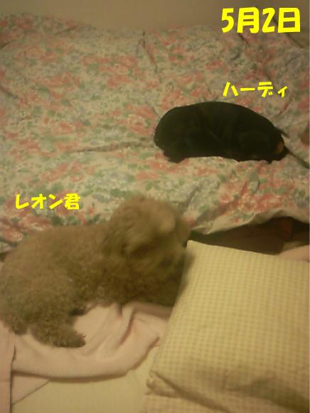 8_20100505012706.jpg