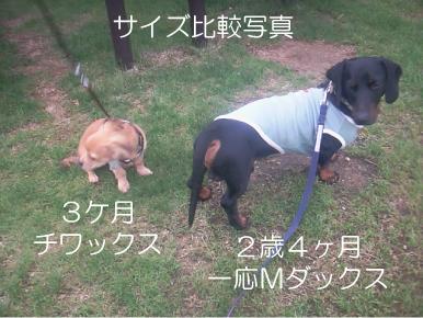 8_20100630133001.jpg