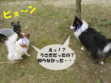 8_20100703003606.jpg
