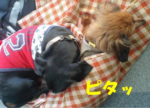 8_20110128224757.jpg