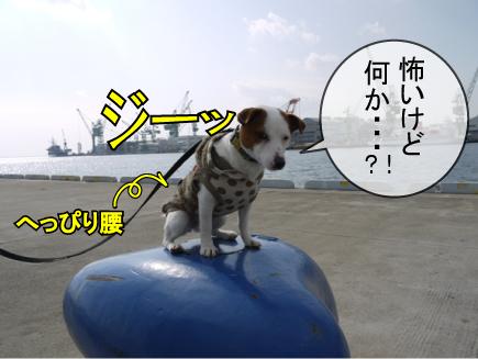 9_20100305001109.jpg