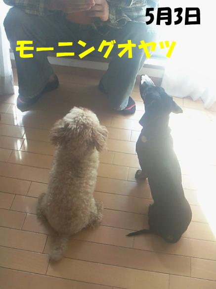 9_20100505012713.jpg