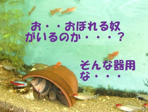 溺れませんよ