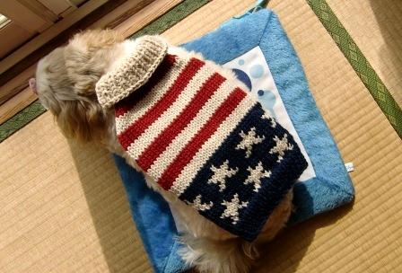 星条旗風セーター