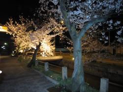 玉串川の夜桜