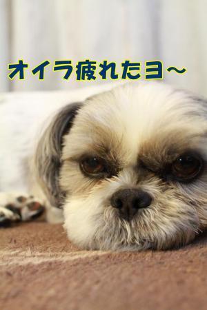 001_20101214222439.jpg
