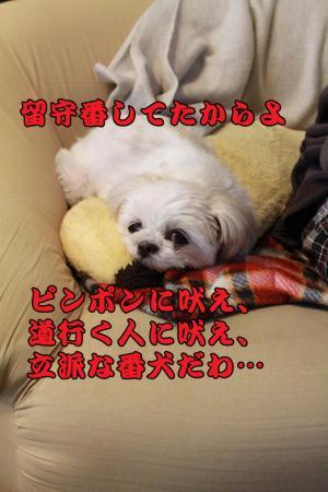 005_20101214222438.jpg