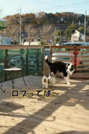 020_20101210172531.jpg