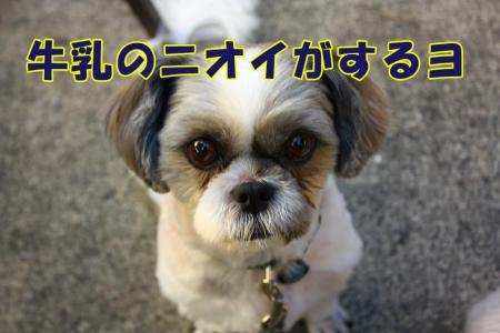 025_20101001184329.jpg