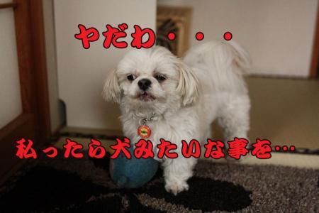 IMG_0156.jpg