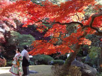 NANSYOUSOU201211114.jpg
