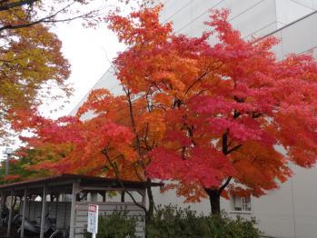 TOWADASIKOUYOU2012110103.jpg