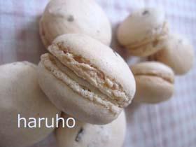 sakura-dakk2.jpg