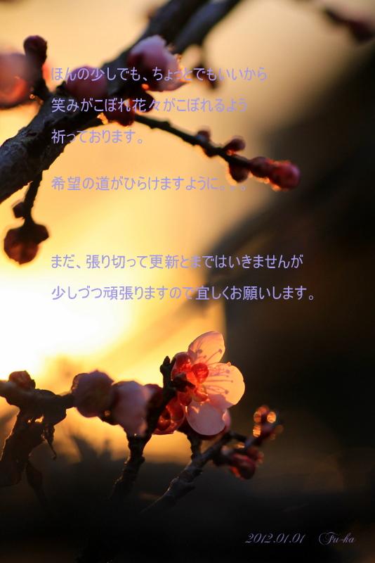 IMG_2975-1.jpg