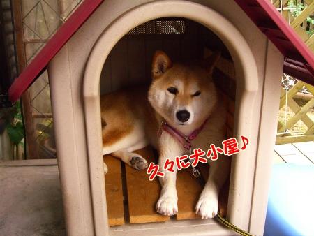 犬小屋にIN
