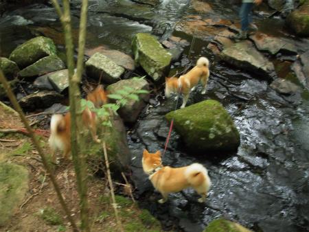 川で戯れる