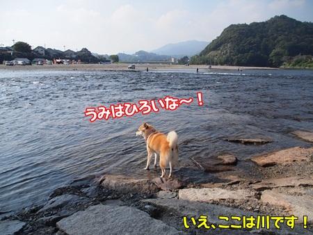海はひろいな~!?
