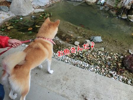 お魚さん♪