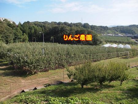 リンゴ畑!
