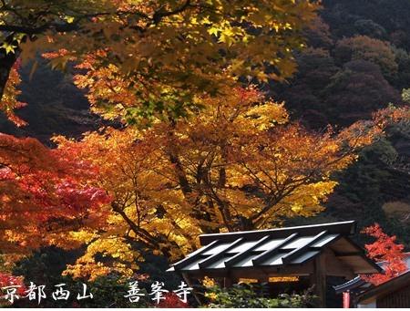 紅葉が綺麗