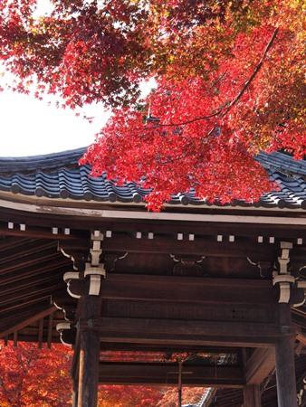 紅葉が綺麗♪