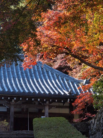 阿弥陀堂と紅葉