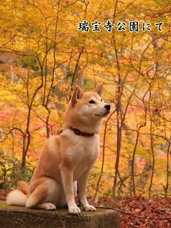 さくら紅葉狩り中?