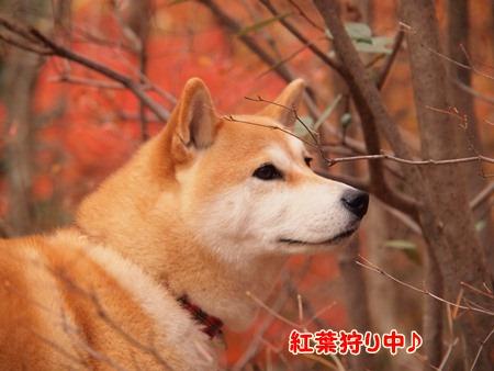 紅葉狩り中~