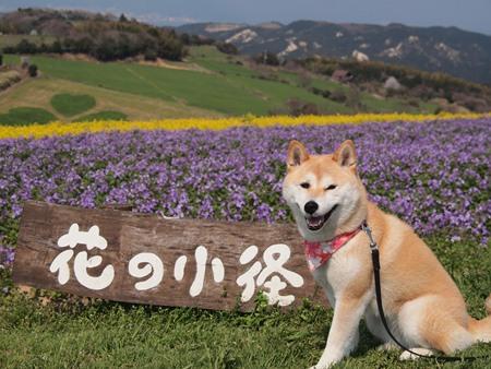 花のじゅうたん~