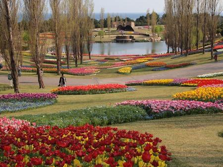 満開の公園