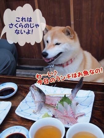 いさぎの定食♪