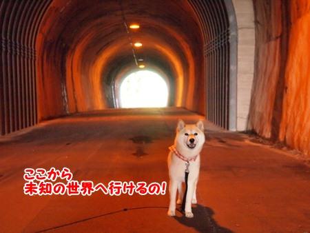 未知のトンネル!?