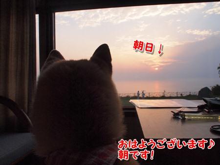 朝日を見るわんこ