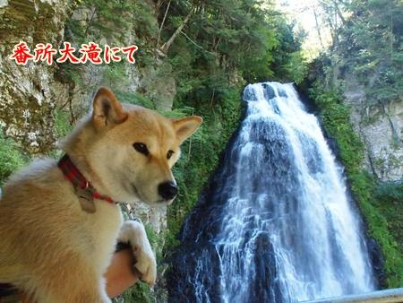 大滝とさくら