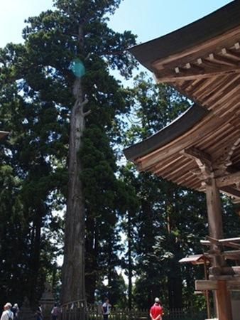 中社と御神木