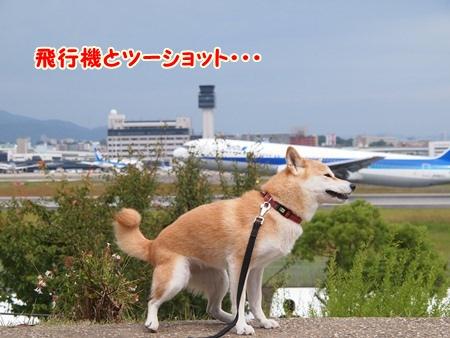 飛行機と♪