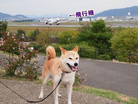 飛行機小さい・・・
