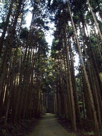 大きな木立