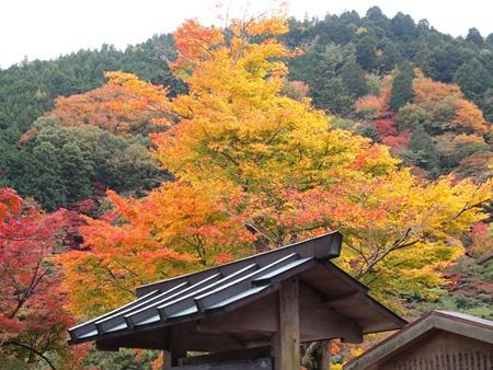 紅葉が綺麗~