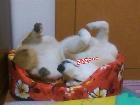 寝てますねん