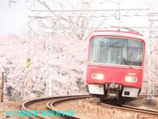サクラと名鉄2010 3