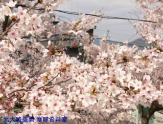 舞鶴基地 四月に撮った最終号 3