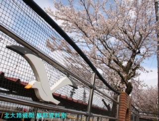 舞鶴基地 四月に撮った最終号 8