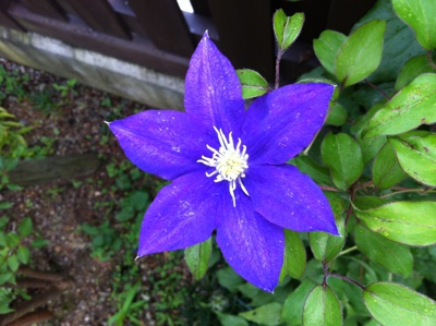 fc2blog_2012062515435244c.jpg