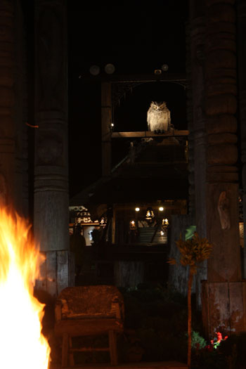 アイヌ 火祭り (10)
