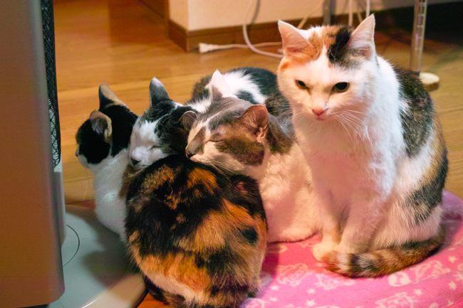 みんなで暖める猫たちブログ