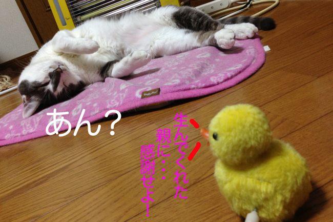 ギンちゃんf03ブログ
