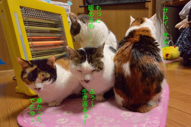 猫たちv02ブログ