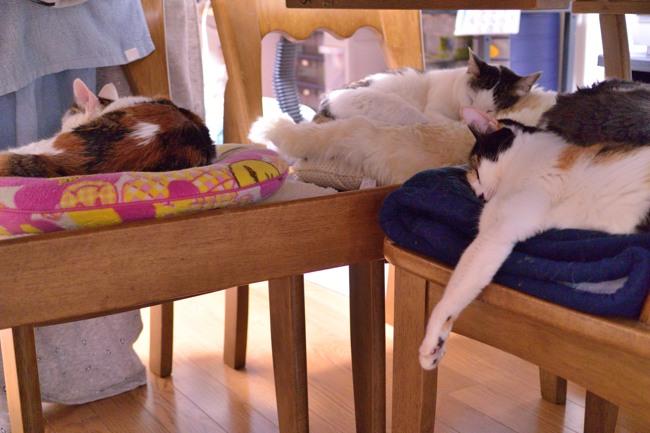 猫たちv06ブログ